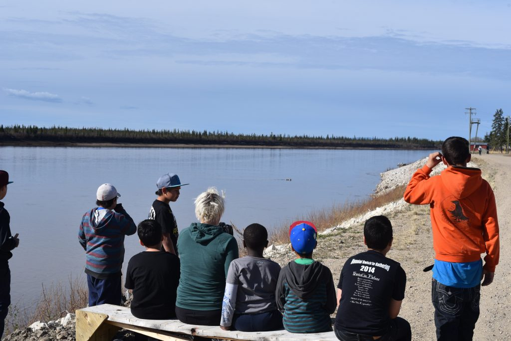 Living learning- a classroom session is interrupted to watch caribou swim across the Porcupine River